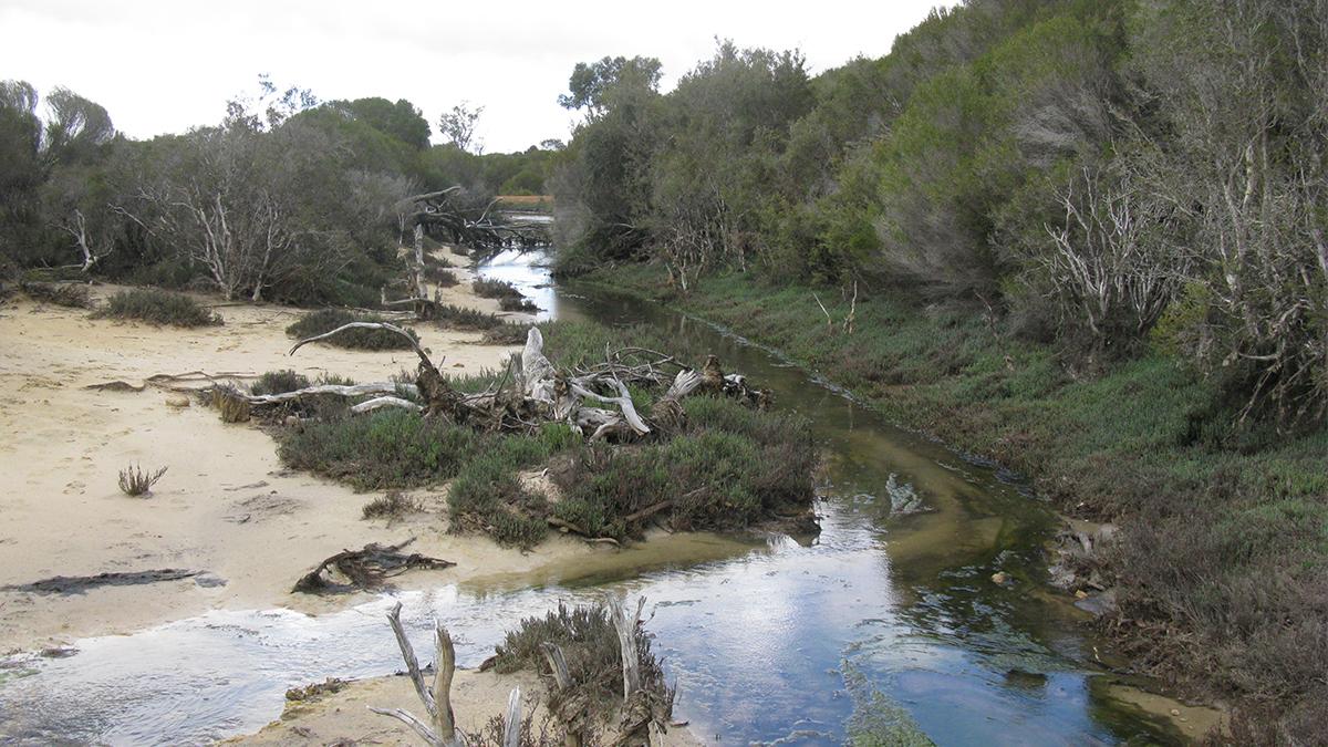 Gairdner River