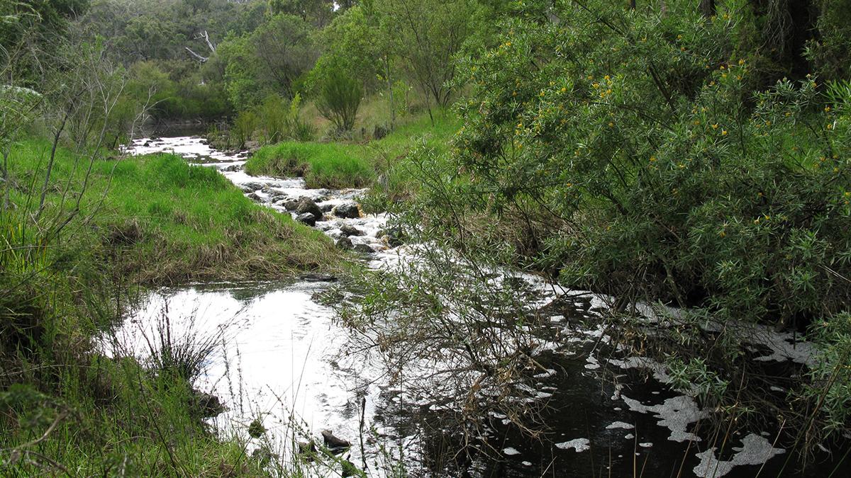 Napier Creek