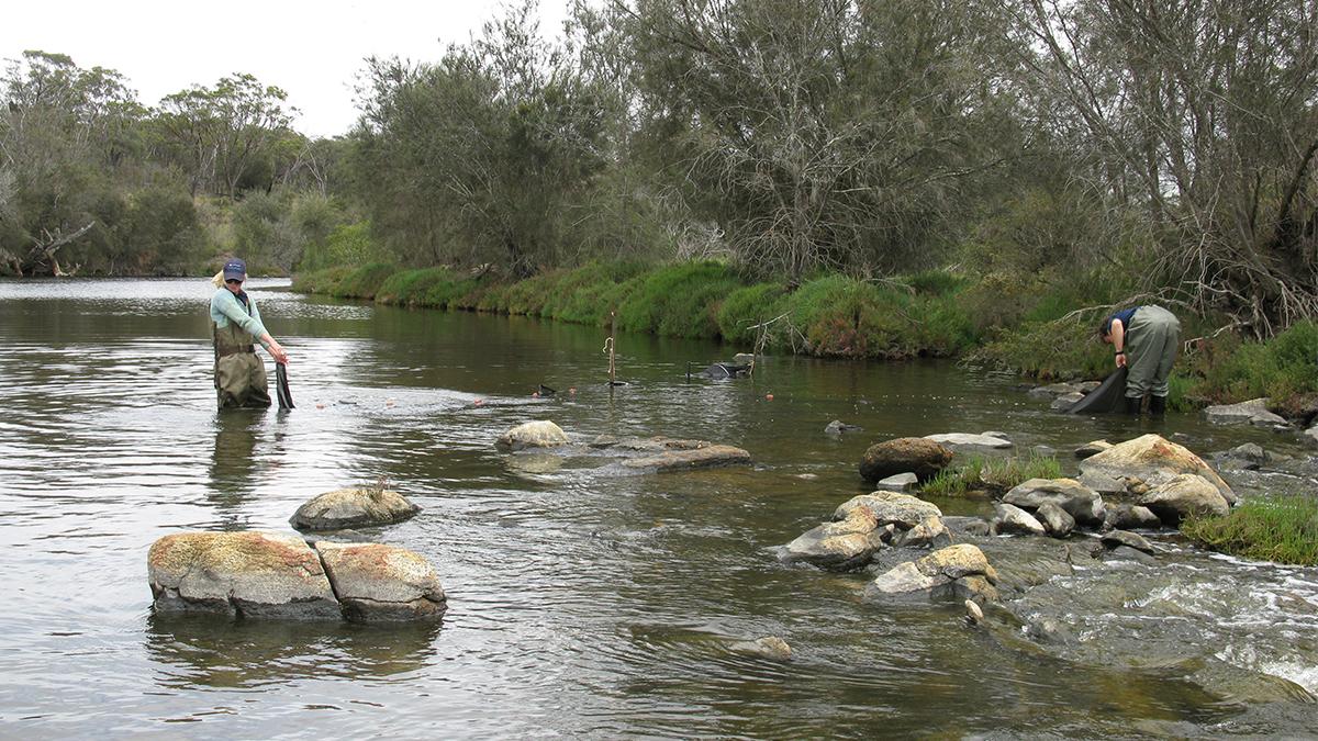 Pallinup River