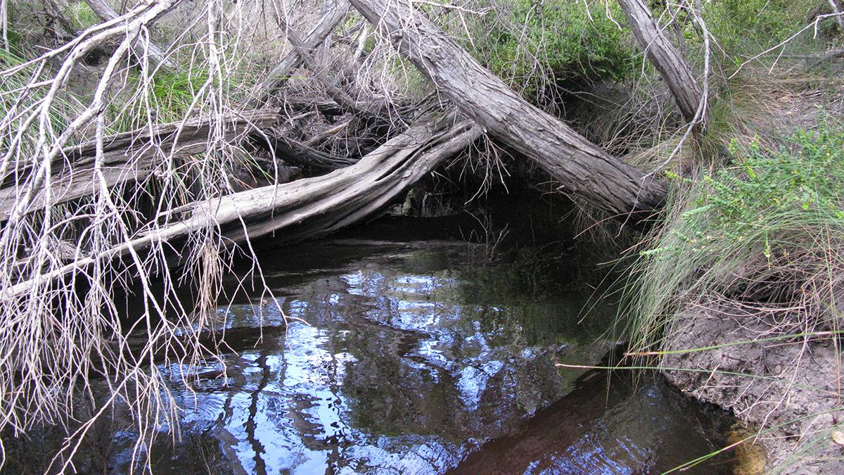 Waychinicup River