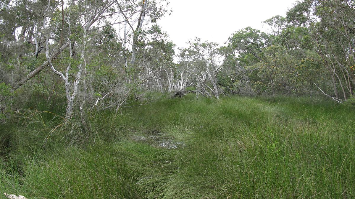 Willyun Creek