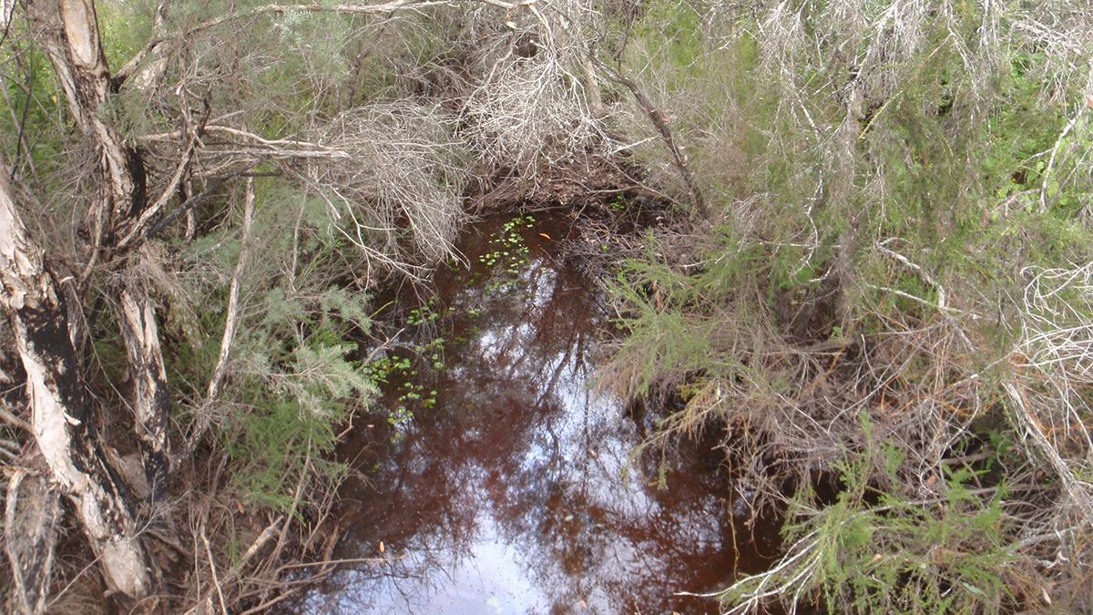 Cleerilliup Creek
