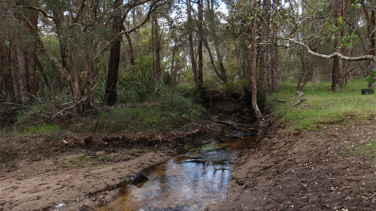 Sheepwash Creek