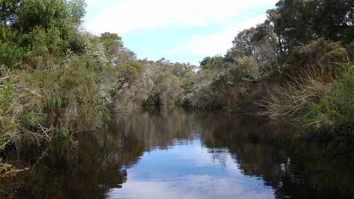 Marbelup Brook