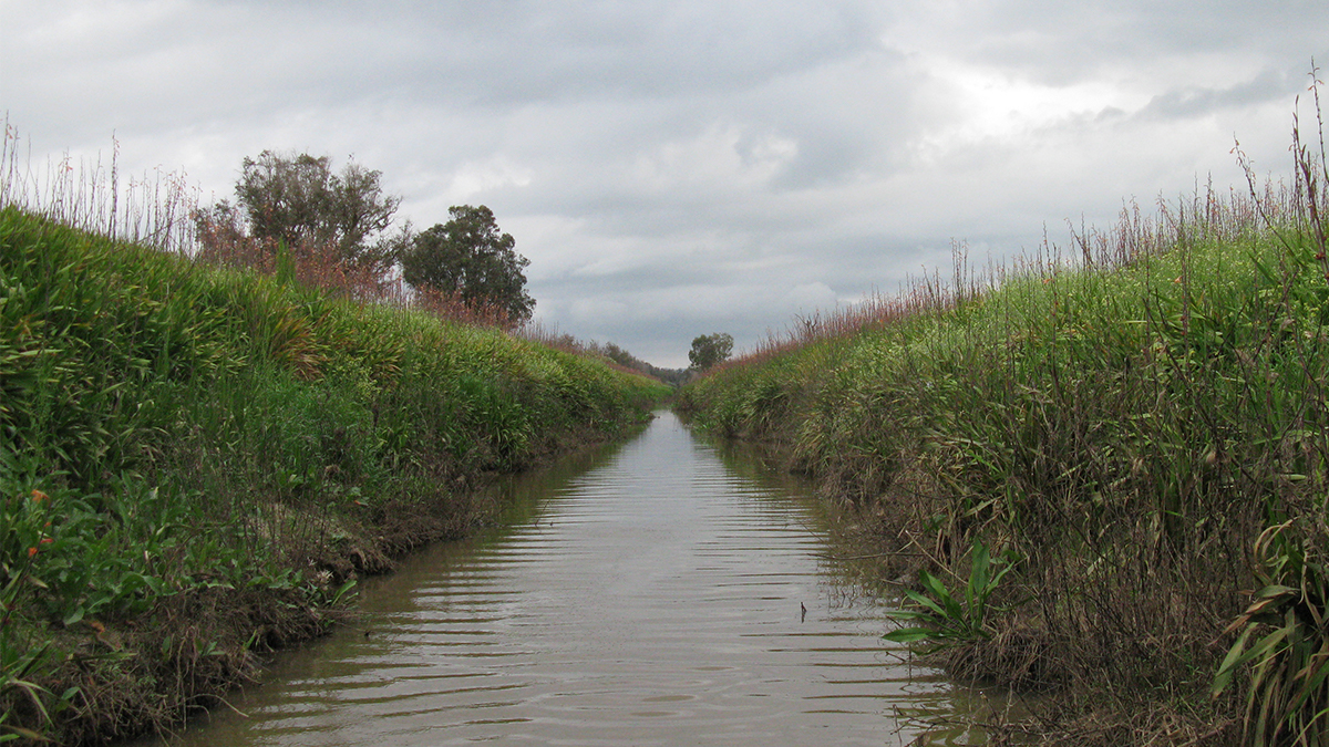 Harvey River