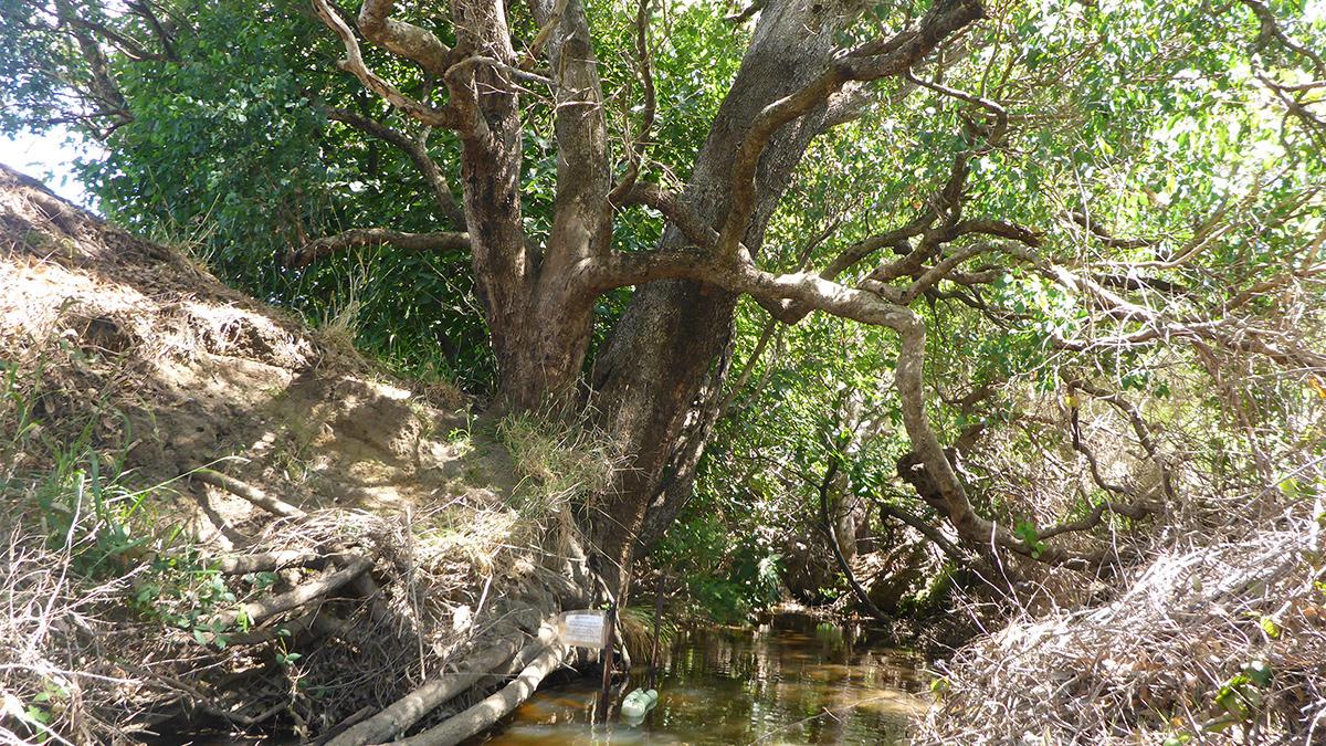 Logue Brook