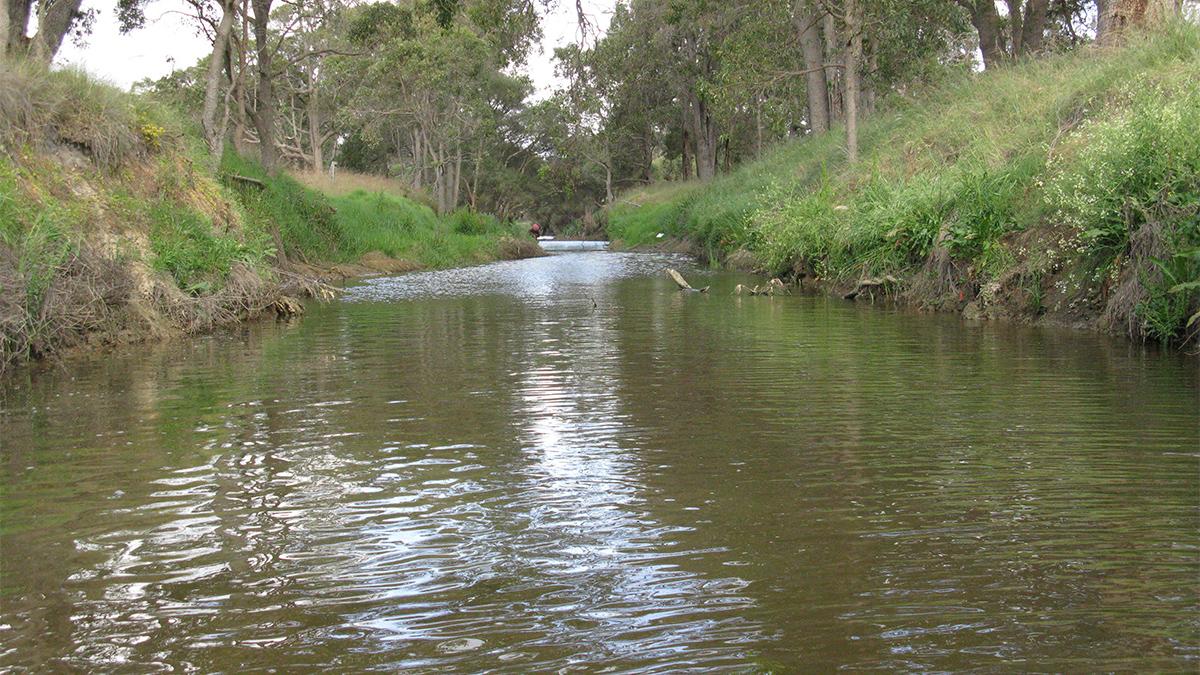 Mayfield drain