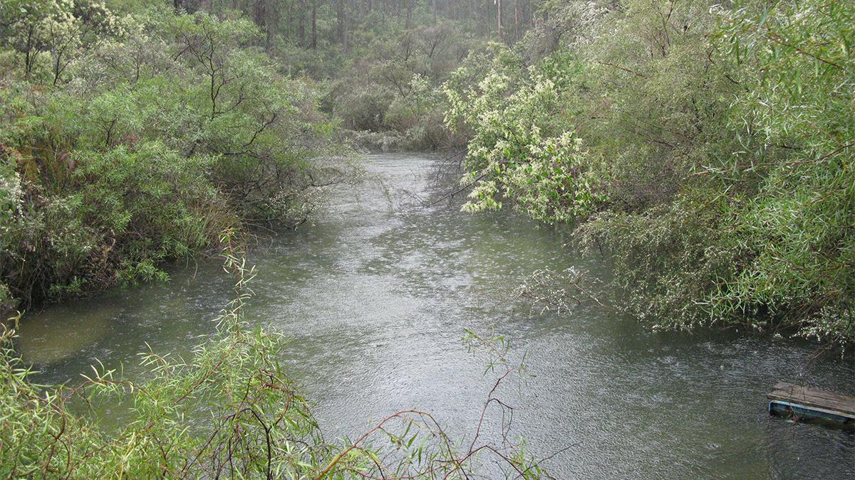 Samson Brook