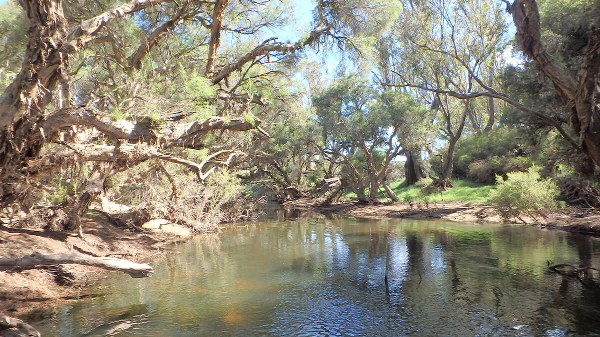 Murray-Marrinup Brook