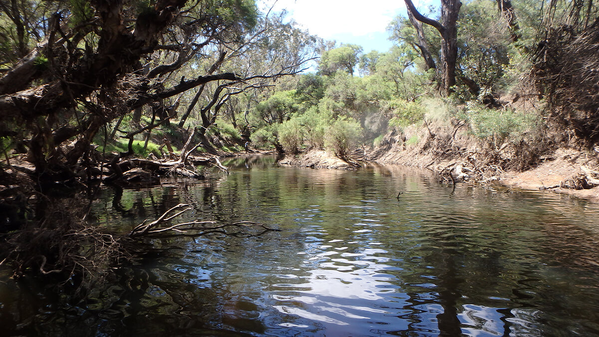 Murray-Marrinup Brook