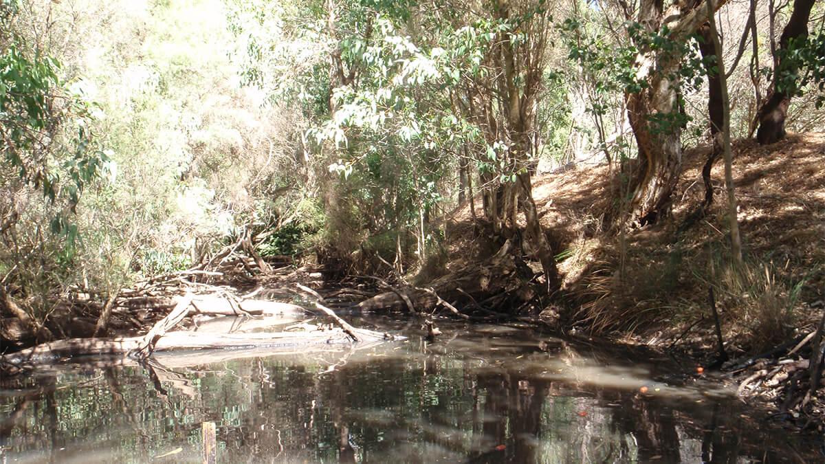 Serpentine River