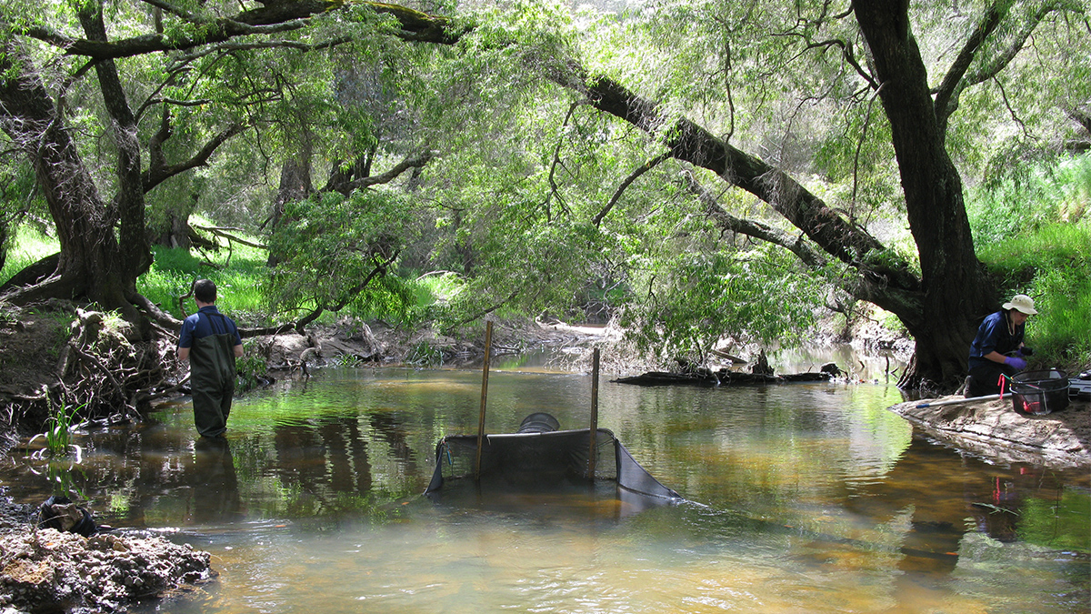 Ferguson River