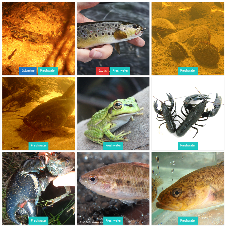 Healthy Rivers Biodiversity pages