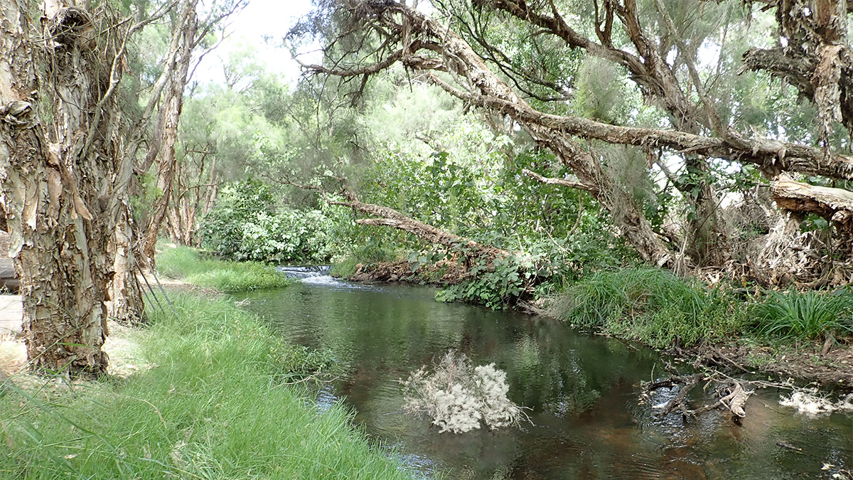 Gingin Brook