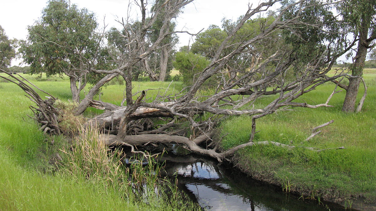 Gingin Brook