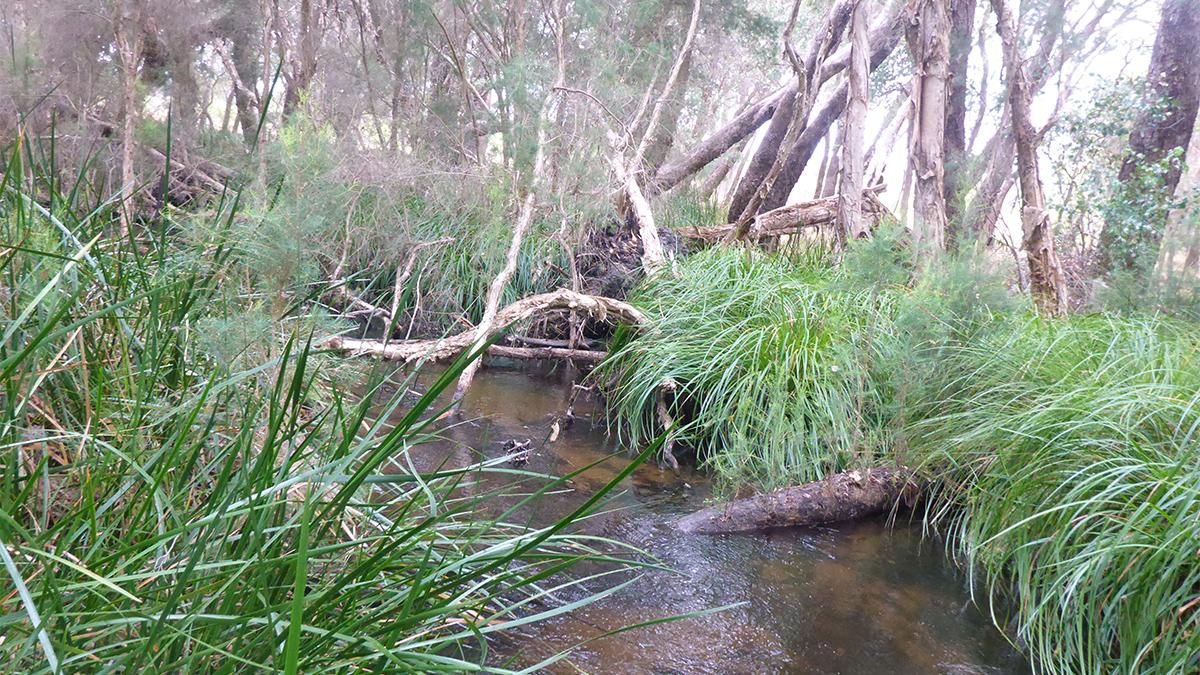 Lennard Brook