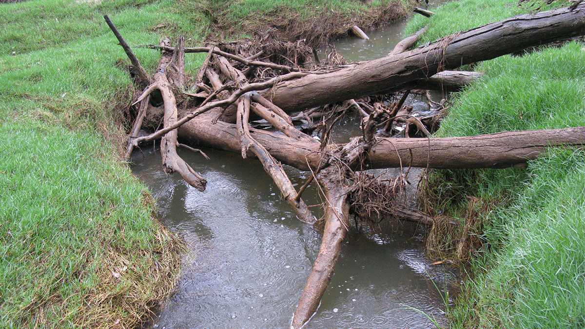 Moore River