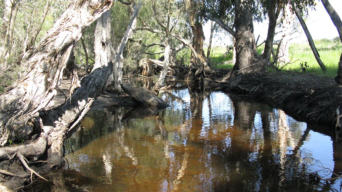 Bibby Creek