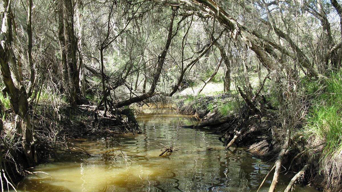 Mullering Brook