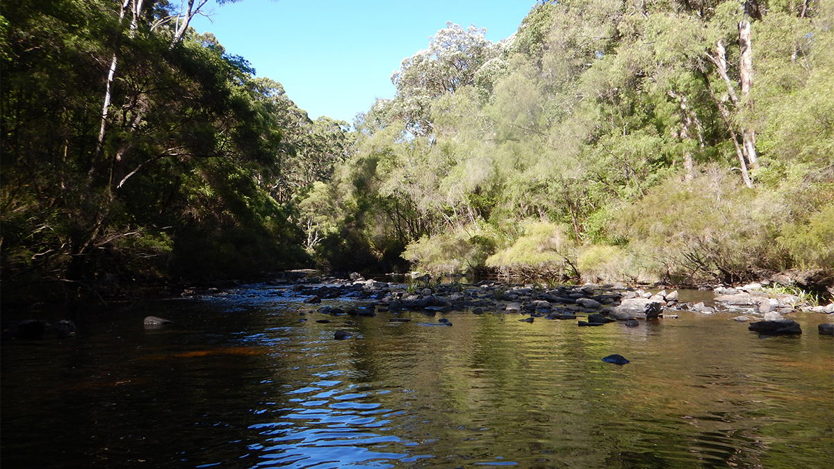 Warren River
