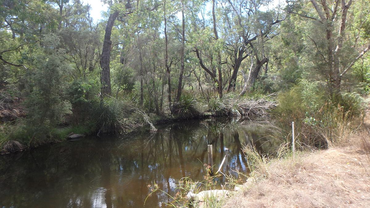 Wilgarup River