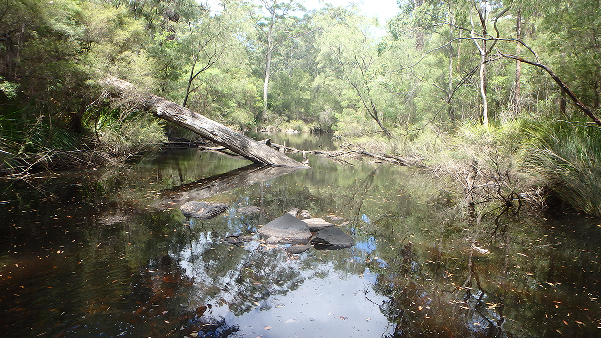 Donnelly River